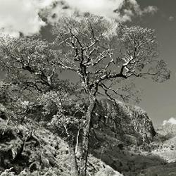 Fotografia-Canastra-01