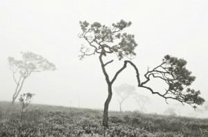 Fotografia-Canastra-04